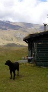 Log Cabin with Dog